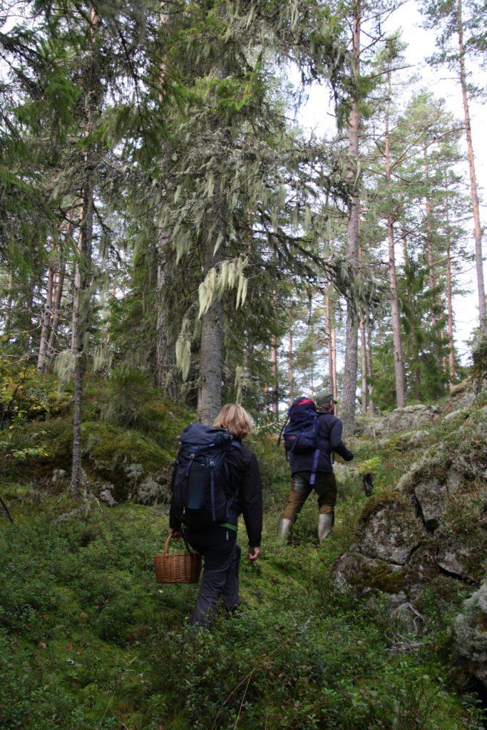 Personer vandrar i skogen
