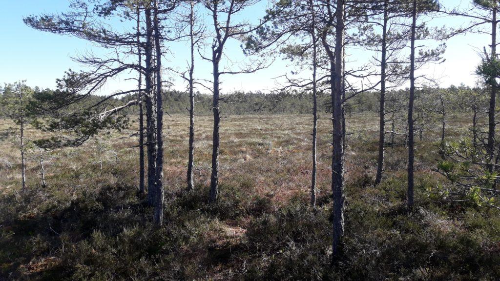 Våtmark och träd