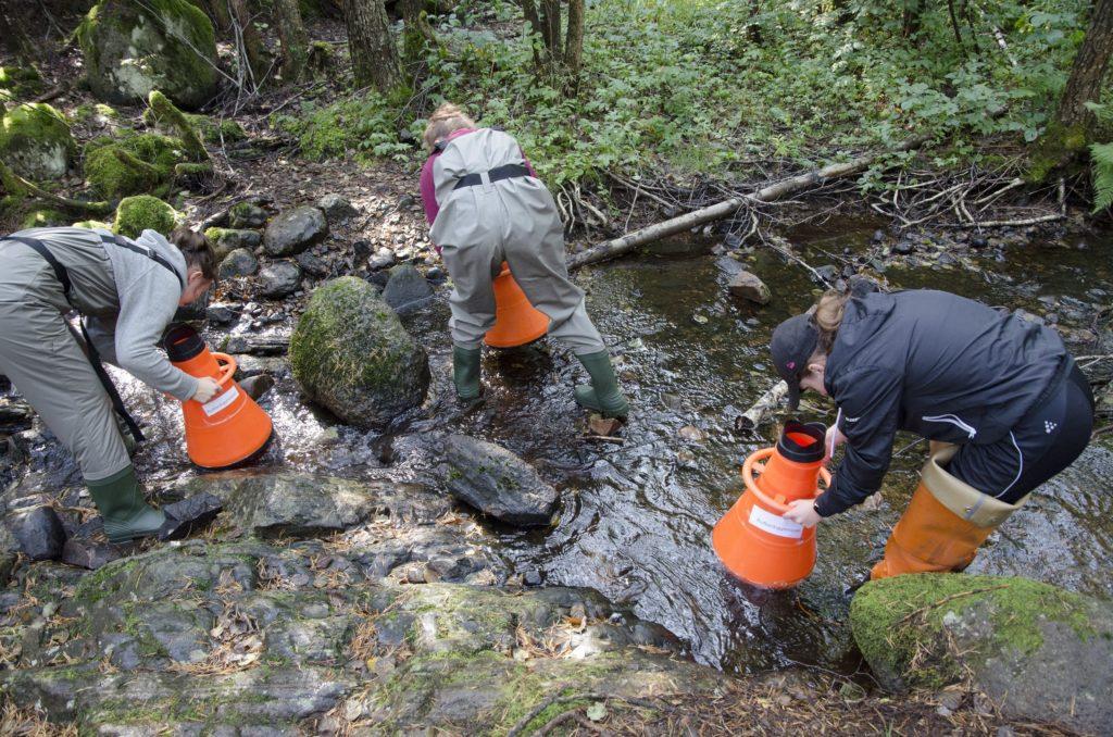 Elever tittar i vattenkikare på djur som lever i bäcken